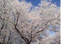 2013年3月20日 春分 北京雪景