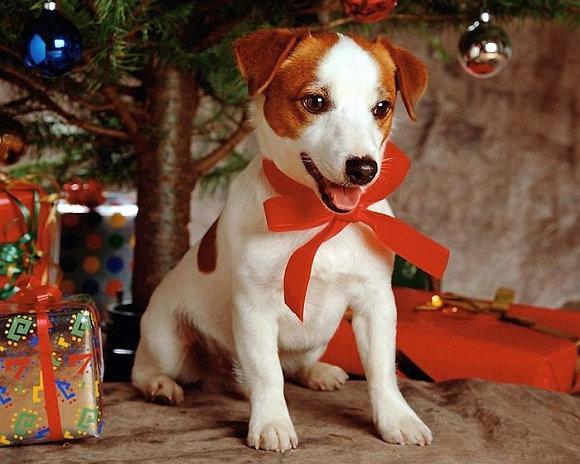 圣诞节贺卡图片及祝福语:圣诞萌宠(组图)