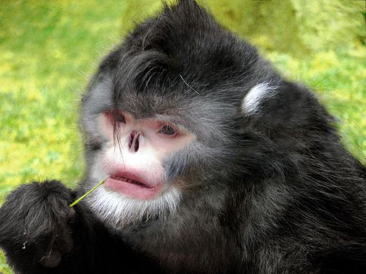 全球最奇异十大新物种