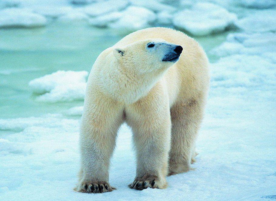 雅思阅读模拟文章:全球变暖