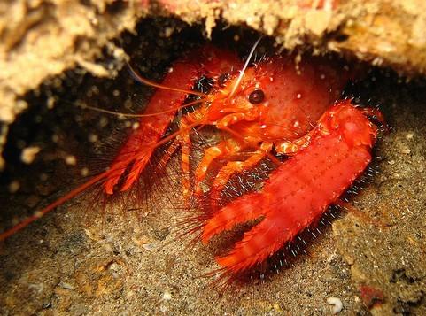 雅思词汇:海洋里的甲壳类动物