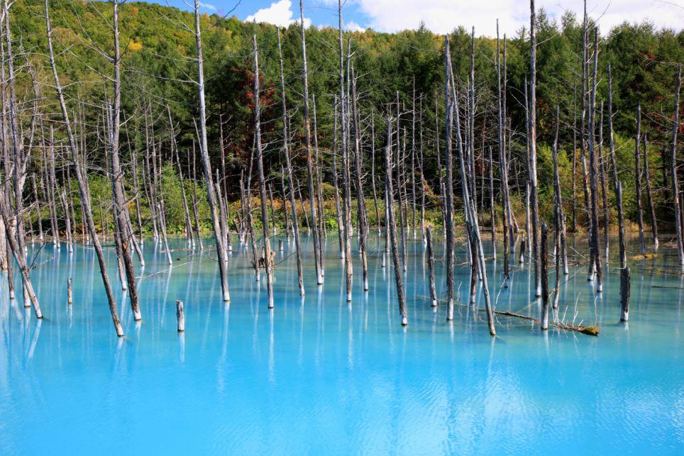 日本防灾堤坝内惊现湖泊和桦树林
