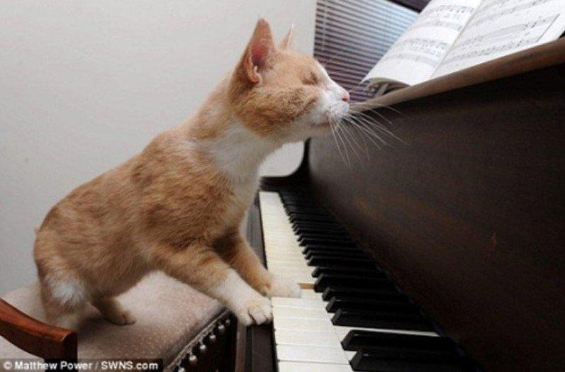 英国6岁盲猫痴迷弹钢琴