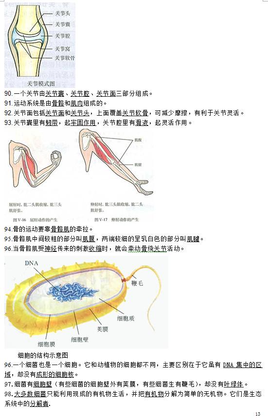 初中生物会考复习资料:八年级(上)图集附题目