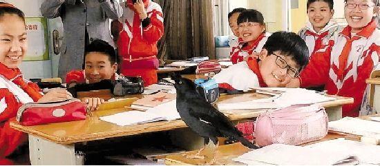 H7N9禽流感作祟 八哥闹学堂引喧闹