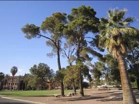 图为University of Arizona校园的照片