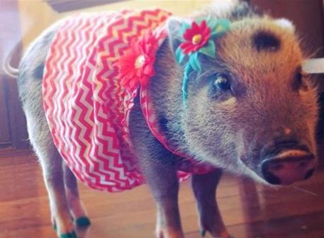 我们家这只可爱的小猪仔