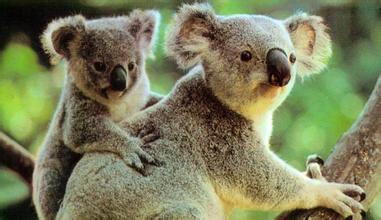 2015澳洲留学:SVP签证计划新增院校 面向大专课程教育