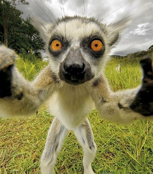 全球最佳动物自拍照:有的呆萌