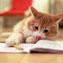 2011年英语四级考试词汇复习手册