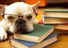 2012年6月英语四级作文模板:大学生择业