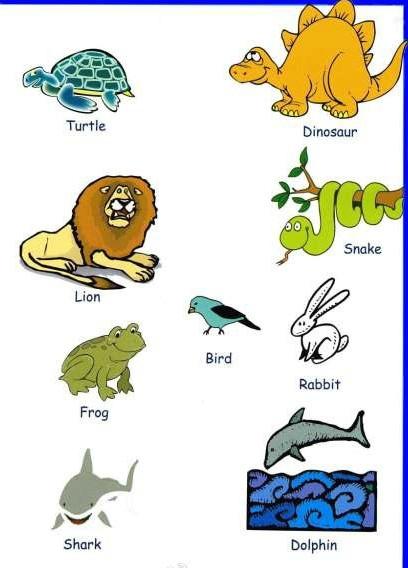 中学生英语学习必备:动物英语单词大全(图)