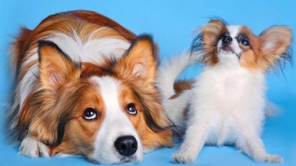 漫话英伦:狗眼看人 谁是宝贝儿?