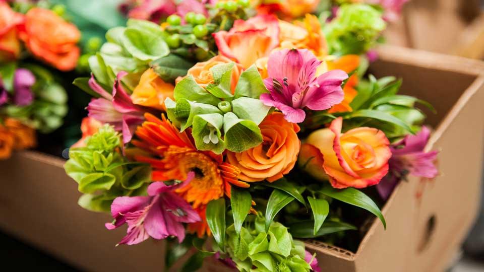 "Ancestor of all flowers revealed by scientists科学家揭示花卉""祖先""的样貌"