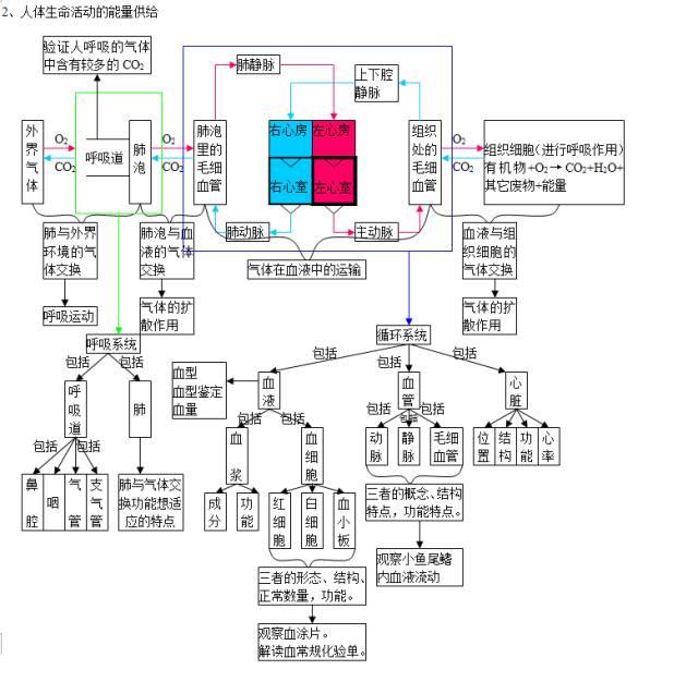中考生物知识点结构图分类整理: 生物圈中的人