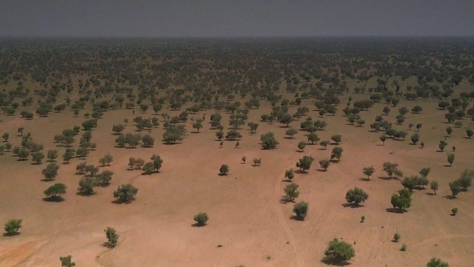 """Africa's Great Green Wall 非洲的""""绿色长城"""""""