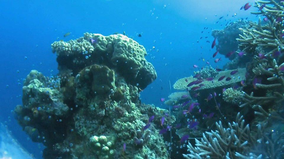 Acidic oceans will reduce sea life, says study 研究说酸性化海洋会导致海洋生物减少