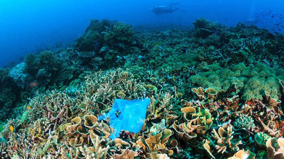 Plastic threatens coral reefs海洋塑料垃圾威胁珊瑚礁的生存