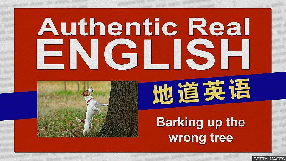 "Barking up the wrong tree英国人用 ""喊错了树""表示""攻击错了目标"""
