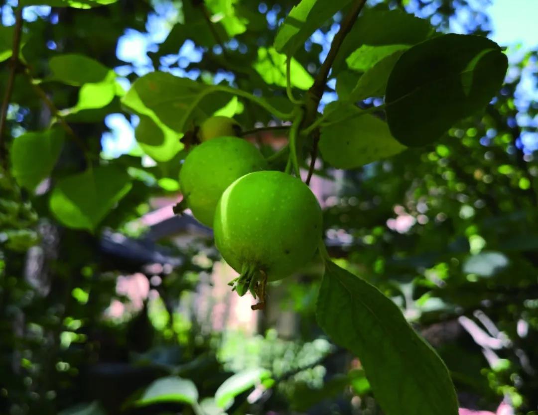 小苹果曲谱原创是谁