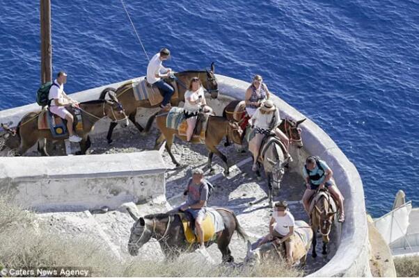 希腊爱琴海的驴已不堪重负 只因游客胖子越来越多!