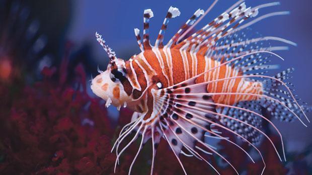 盘点杀伤力最强的十种鱼