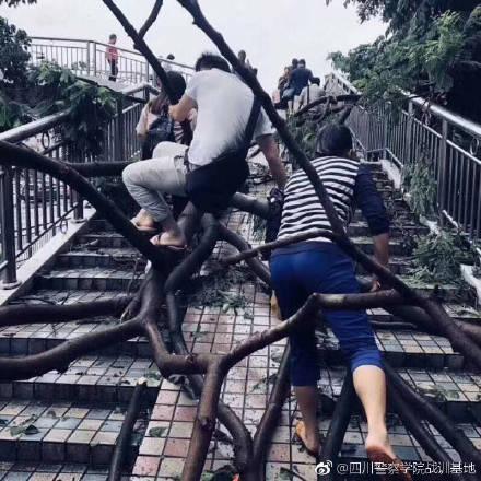 """台风""""山竹""""受害现场"""