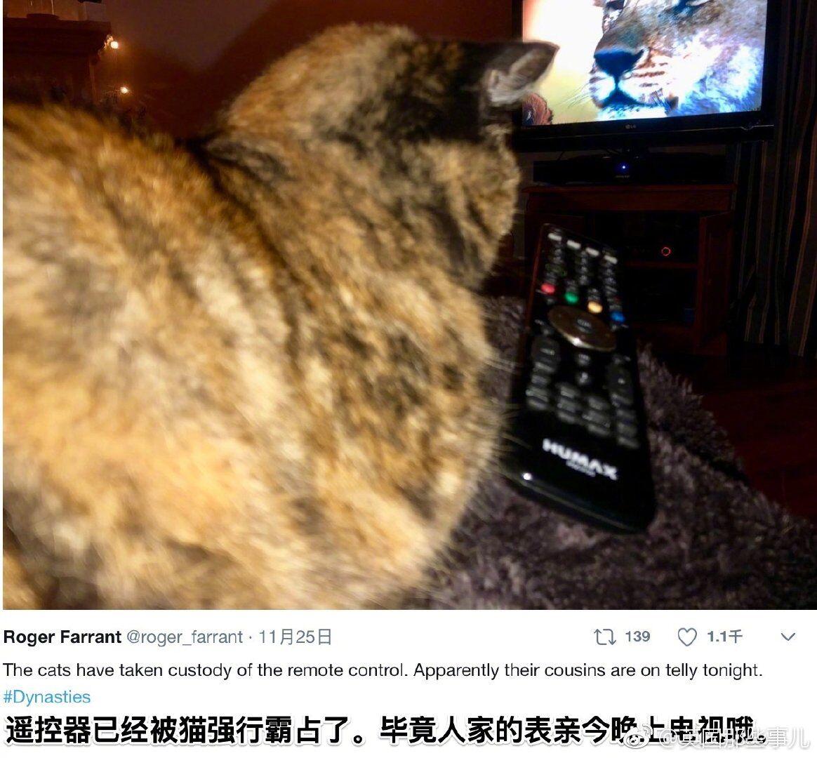 豆瓣9.6 BBC神级纪录片《王朝》 堪比动物界的《权力的游戏》!