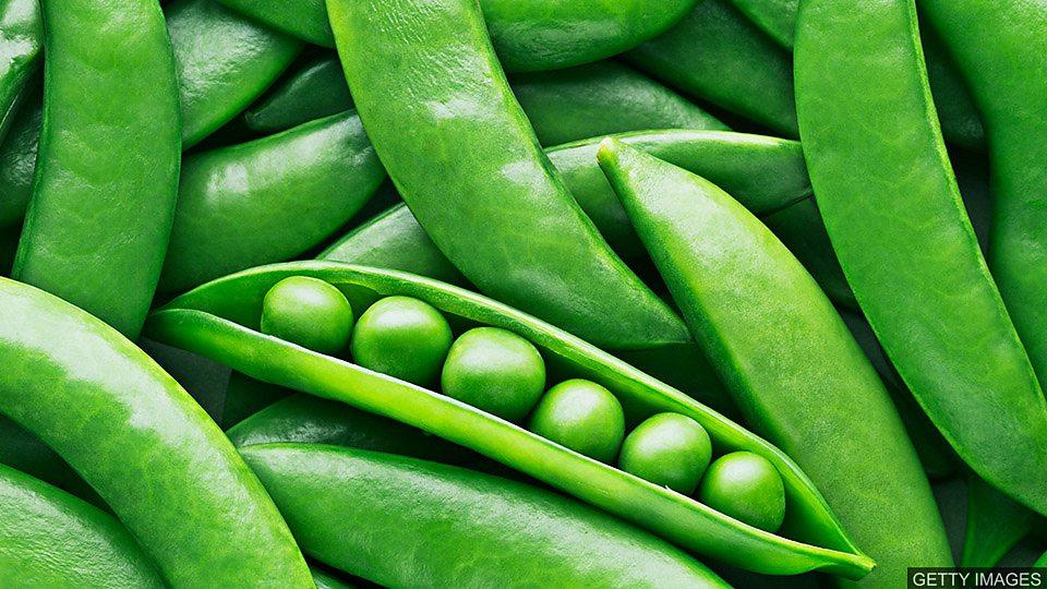 豌豆变塑料 Making 'plastic' from peas