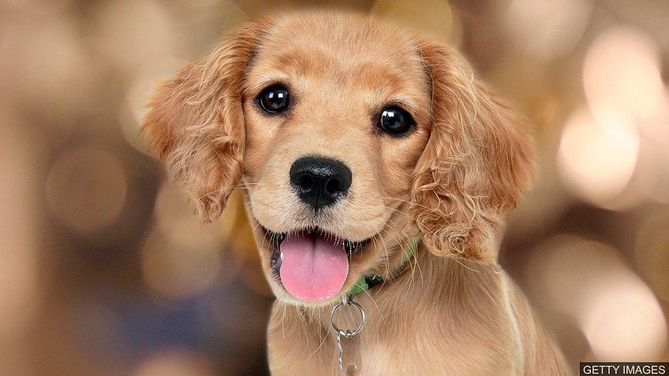 Puppy love 养狗不只是一种短暂的爱Puppy love 养狗不只是一种短暂的爱